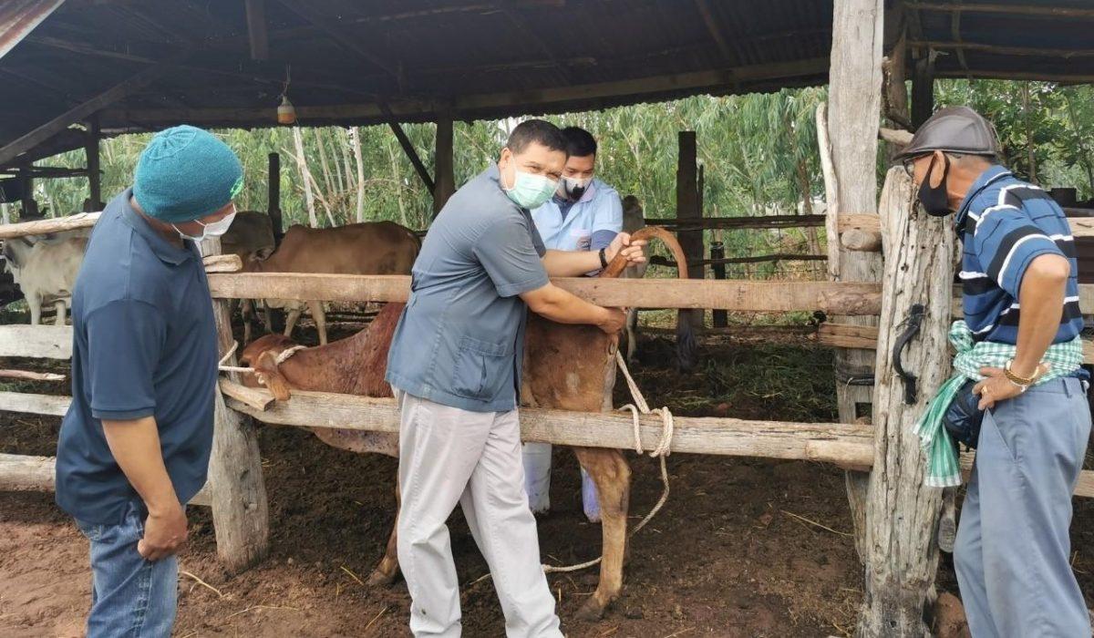 U2T คณะเกษตรศาสตร์ มข. จัดอบรมเชิงปฏิบัติการ เรื่อง มข.โคบาลอาสาในการรักษาสุขภาพโคเบื้องต้นเนื่องจากโรคลัมปี สกิน ในพื้นที่ ต.โคกสง่า อ.พล จ.ขอนแก่น